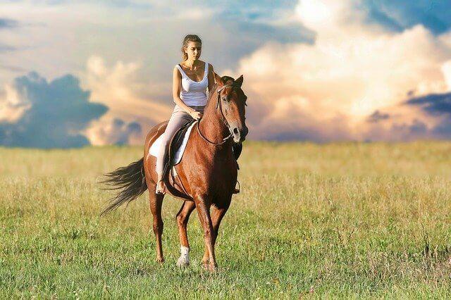 Die Pferdehaftpflicht im Vergleich