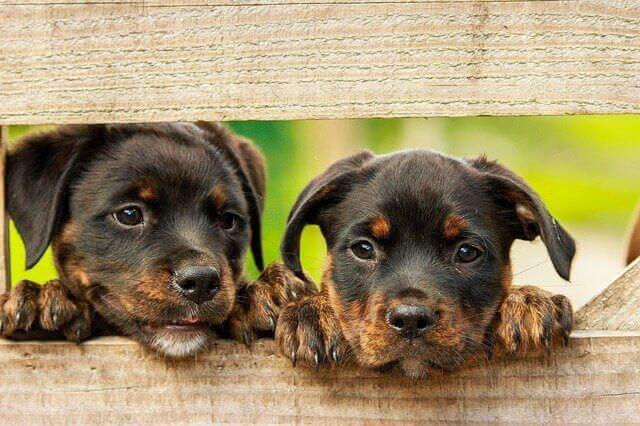 Hinweis zum Hundehaftpflicht-Vergleich